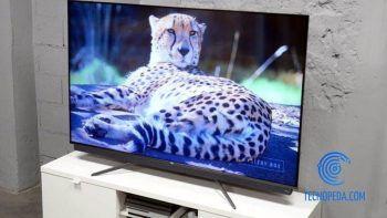 Tigre en un televisor